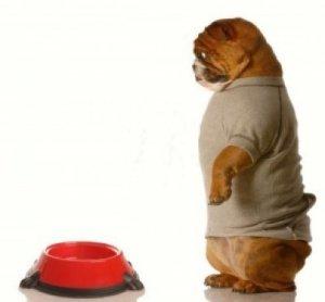 dog at food bowl
