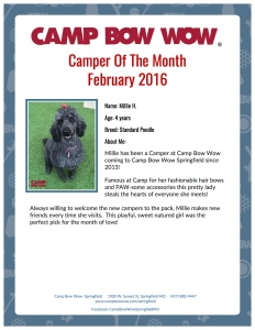 Camper of month Springfield Millie H.
