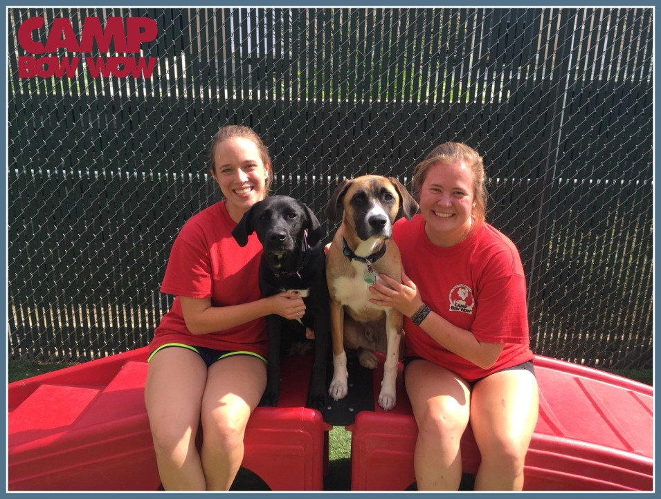 CBW Intro Camp Counselor Pups Blog 1