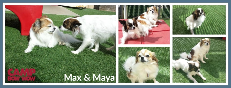 cbw-nov-max-and-maya-6
