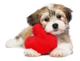cbw-valentines-day