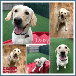 CBW Daisy B Collage