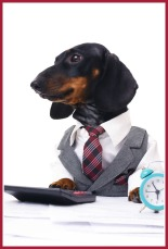 portrait of a business dachshund wearing a suit and tie isolated over white