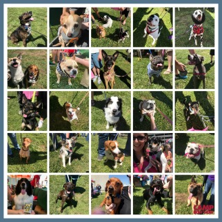 CBW Woofstock 2017 Collage