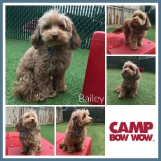 CBW Bailey Crist June COM Collage