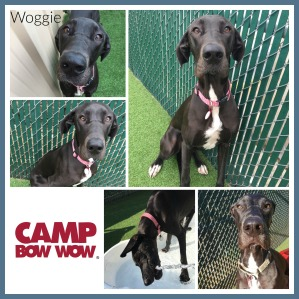 Woggie Collage