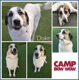 Duke Mealy Collage