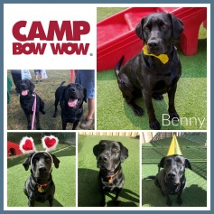 Benny Collage