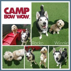 Rocko & Winnie Collage