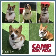 Murphy Davidson Collage